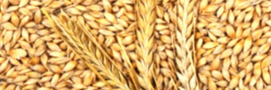 Beneficios de la cebada